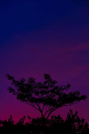 Colorful Evenning Sky (Blue) Stock Photo - 14920388