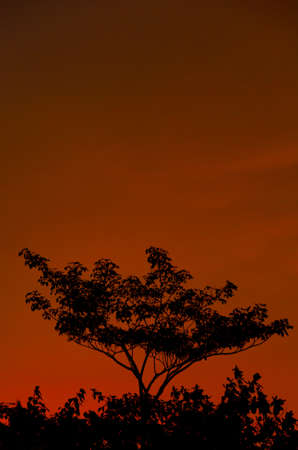 Colorful Evenning Sky (burning) Stock Photo - 14920391
