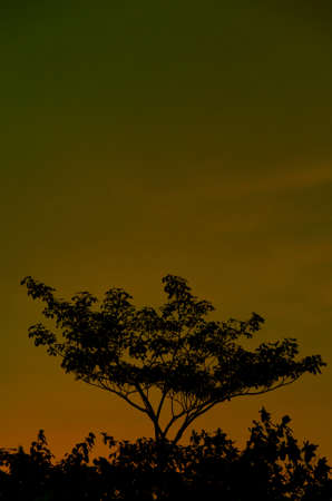 Colorful Evenning Sky (gold) Stock Photo - 14920390