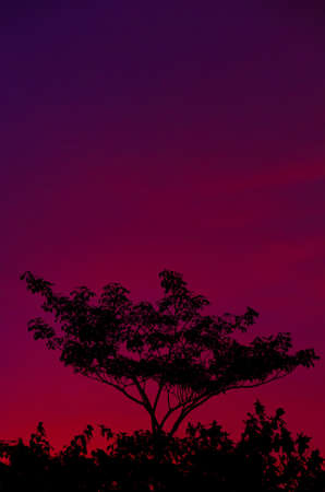 Colorful Evenning Sky (violet)  photo