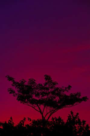 Colorful Evenning Sky (violet) Stock Photo - 14920389