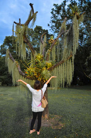 An Asian woman is worshiping a weird tree, is this witchcraft or just amusement?