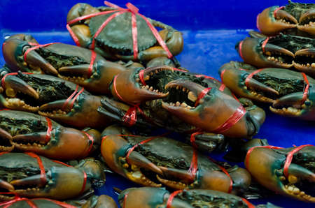 slaughter: Life crab selling in the market of Thailand. Ready to be slaughter. Stock Photo