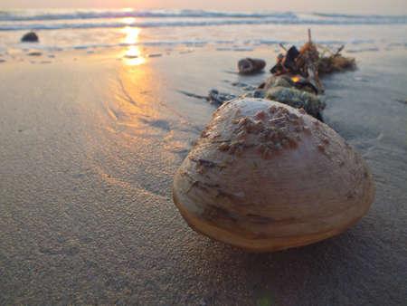 ostra: Shell varado por la ola, en Hua Hin, Tailandia