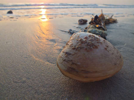 Shell washed up by the wave, in Hua Hin, Thailand photo