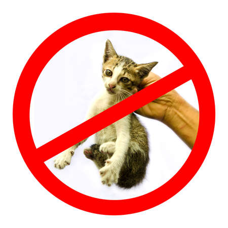 abandon: Unwated cat or no cat bullying sign with white background