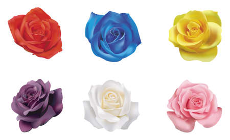6 color roses collection Vector