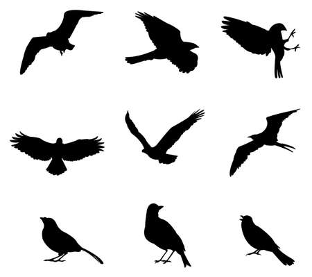 golondrinas: Los conjuntos de pájaros de la silueta, en diversas especies, crear por vector
