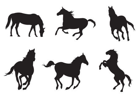 black horses: Sets of silhouette horse, in various actions, create by vector