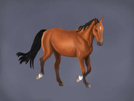racehorses: A beautiful horse isolated in grey background