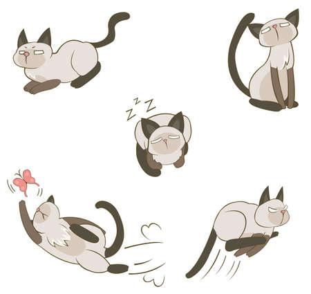 siam: Siamese cat in various action, create by vector Illustration