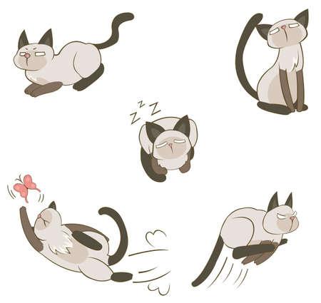siamese: Siamesische Katze in verschiedenen Ma�nahmen, die von Vektor zu erzeugen