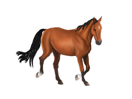 free clip art: A beautiful horse isolated in grey background