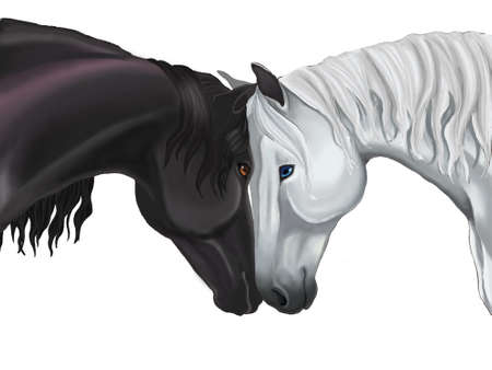 Couple horse sharing their love in white background photo