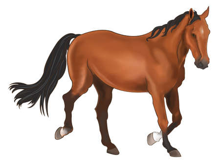 horse running: A beautiful horse isolated in white background Illustration