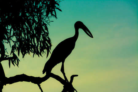 Silhouette heron standing on the tree top in sunset scene photo