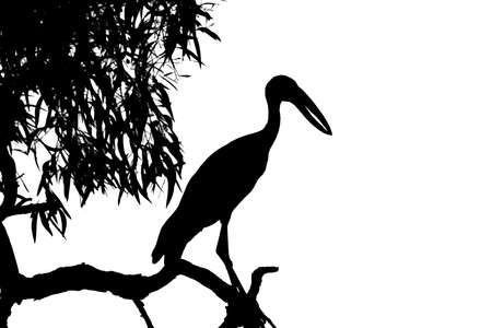 Silhouette heron standing on the tree top in black and white scene photo