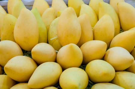 barracuda: Pile of fresh Barracuda mango on sales in Thailand open market  Barracuda mango is a tropical fruit well known in Thailand  Stock Photo