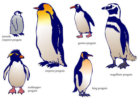 emperor: Various species of penguin with name, create by vector
