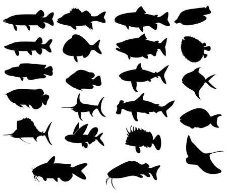 snake head fish: Set di pesci silhouette 3 sia con acqua di freah e di mare, crea un vettore Vettoriali