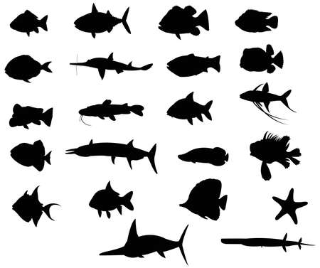Sets of silhouette Fishes 4 with both freah water and sea, create by vector Vector