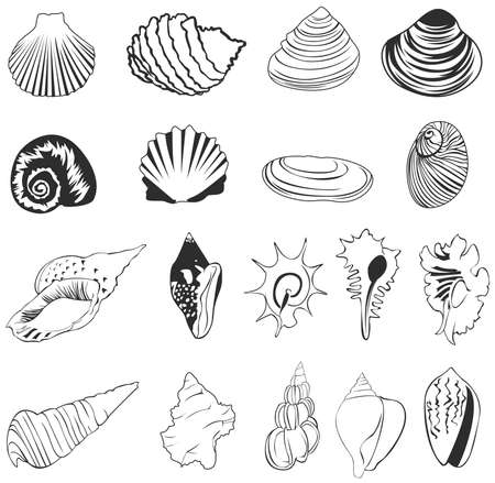 scallop: Set of silhouette shell icons, create by vector Illustration
