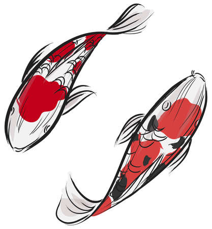 carp fish: Artisic professional painting of Carp fish  Koi  with Japanese art style, create by vector