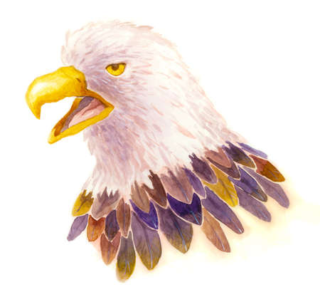 An illustration of an eagle, done by watercolor illustration
