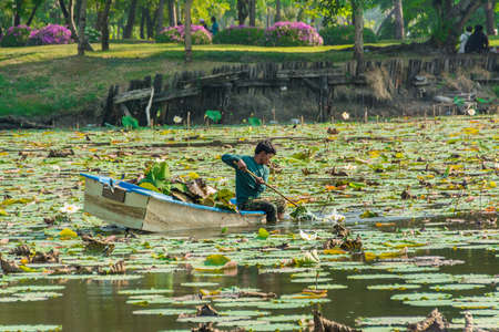 Water pollution: BANGKOK, THAILAND - MAY 17  A man is clearing weeds and die plants from a great lotus pond to prevent water pollution in Thailand on May 17, 2017  Lotus pond with thick clump might cause danger to little boat