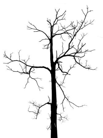 Black and white dead tree with no leaves in isolated background photo