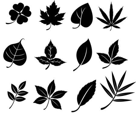 fur trees: Set of silhouette leaves, create by vector