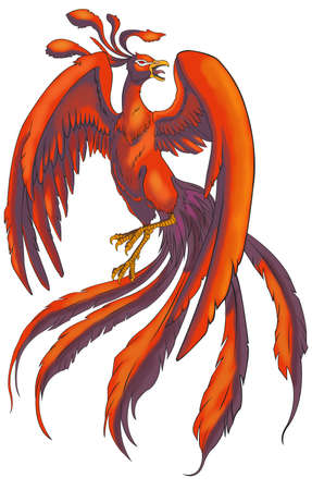 mythical phoenix bird: Chinese Phoenix from Chinese legendary monster, create by vector
