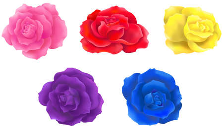 purple rose: 5 color rose collection icon design create by vector