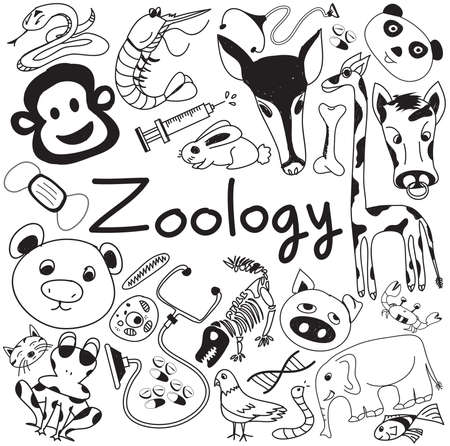 zoology: Zoology biology doodle handwriting icons of animal species and education tools in white isolated paper background for science presentation or subject title, create by vector