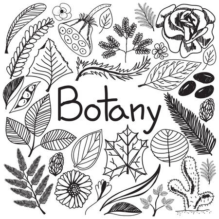 chlorophyll: Botany biology doodle handwriting icons plants and trees in white isolated paper background for science education presentation or subject title, create by vector