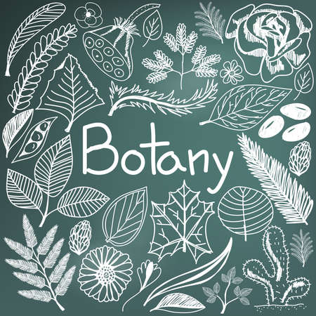 taxonomy: Botany biology doodle handwriting icons plants and trees in blackboard background for science education presentation or subject title, create by vector
