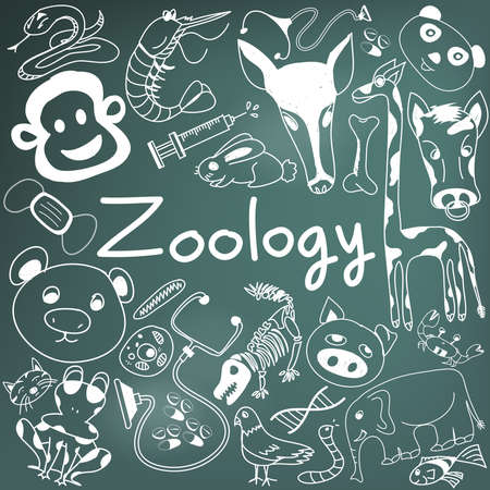 zoology: Zoology biology doodle handwriting icons of animal species and education tools in blackboard background for science presentation or subject title, create by vector