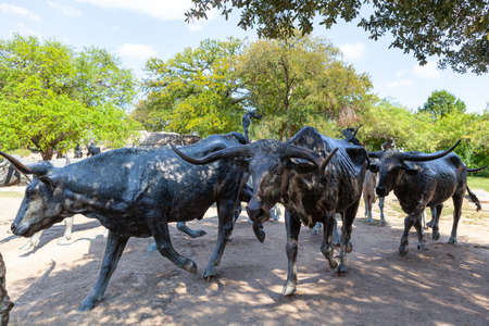 Cattle Drive sulptures at park in Dallas, Texas. Stock Photo