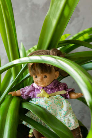 Ugly and scary dolls among green leaves. Banque d'images - 138555417
