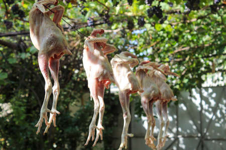 Peeled chicken is dried in the sun in the yard in the summer