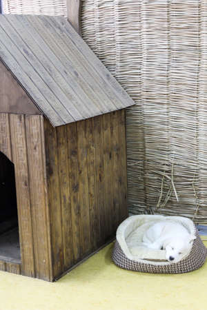 A wooden doghouse for a dog in a straw room
