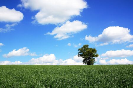 A field of fresh green spring grass cultivated for fodder against a graduated blue sky with white clouds Stock Photo - 4878044