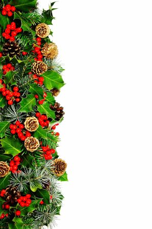 A Christmas border of holly with vivid red berries, cypress, pine and cones photographed over white