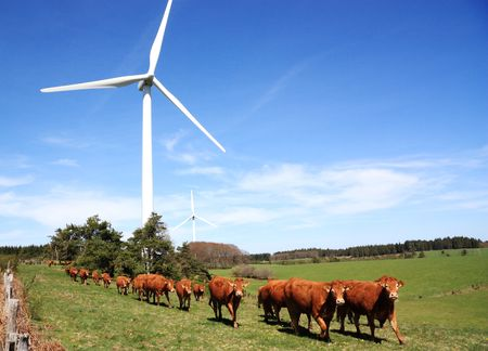 Line of cattle walking past a wind turbine horizontal Stock Photo