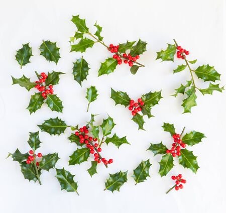 sprigs: Various small sprigs of fresh holly with red berries and additional loose single green leaves isolated on white for use as design elements in your Christmas concepts Stock Photo