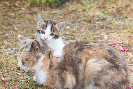 round eyes: Baby kitten with a paw on its mothers back staring at the camera with big round eyes outdoors in the garden Stock Photo