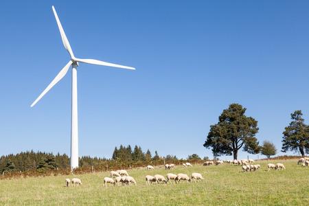 viento: Turbina de viento con un rebaño de ovejas pastando en una colina contra un cielo azul soleado con espacio de copia Foto de archivo