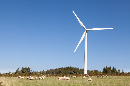 convertor: Flock of sheep grazing below a wind turbine  in an agricullture and sustainable energy concept against a sunny blue sky with copy space Stock Photo