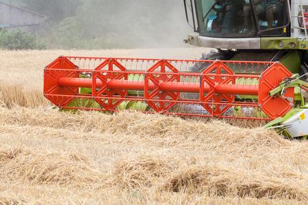cultivo de trigo: Mecanismos de corte en una cosecha cosechadora un cultivo de trigo, Triticum aestivum, como forraje en un campo agrícola, de cerca los detalles