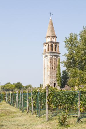 The ancient Bell Tower of Santa Caterina Monastery, Mazzorbo, Venice, Veneto, Italy dating to 1318 viewed from the vineyard